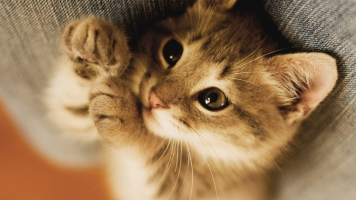 cat-animal-768x1366